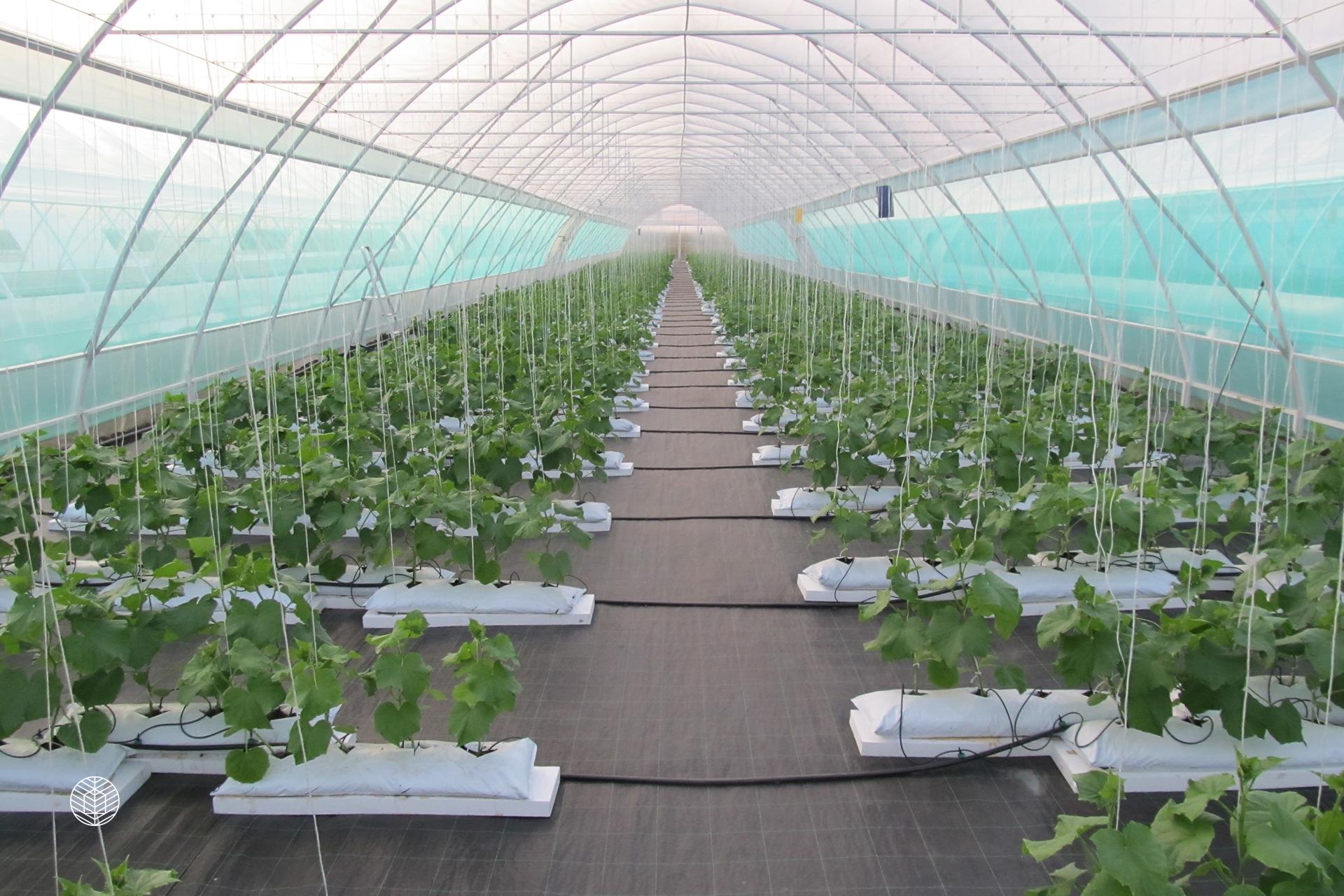 Выращивание цветов в теплице как 18