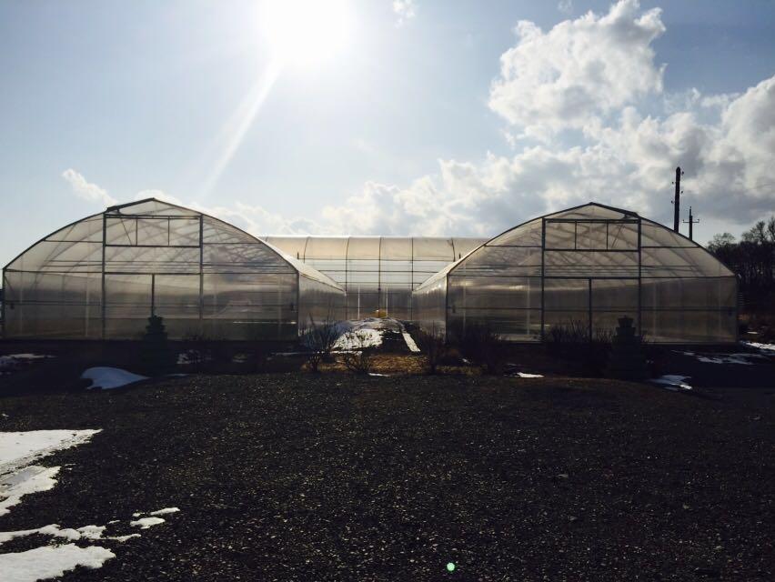 Фермерские теплицы для зеленных культур