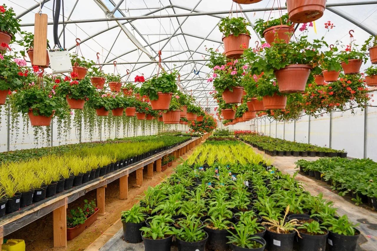Фермерские теплицы для цветов